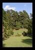 Duke Gardens July 2015 9.42.47 PM (LaPajamas) Tags: nc flora dukegardens gardens