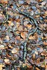 the question mark (Harry McGregor) Tags: leaves leaf branch questionmark texture wood soil winter harrymcgregor dumfrieshouse cumnock ayrshire scotland nikon d3300 poem poetry 20 january 2018