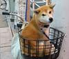 "Matsuyama-37 (photozaki) Tags: ""dogs cats"" dog dogs inu cat cats neko shikoku japan ohenro88 ohenro pilgrimage"