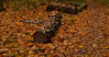 Logs in the litter (МирославСтаменов) Tags: russia moscowregion pushchino log maple litter birch forest autumn