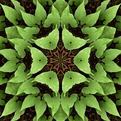 Kaleido Abstract 1724 (Lostash) Tags: art nature edited kaleidoscopes patterns symmetry shapes