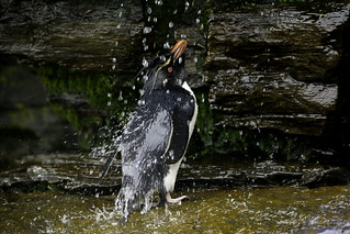 Shower Time in the Falklands - Make it rain!