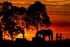 Silhouette Horse (Sterling67) Tags: leneghans australia day horse silhouette sunrise trees clouds