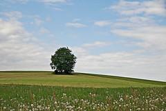 Immer... (Uli He - Fotofee) Tags: ulrikehe uli ulrike ulihe ulrikehergert hergert nikon fotofee baum einsamerbaum frühling löwenzahn grün grünewiese kinder abenteuer smartphone himmel wolken blau freude leben