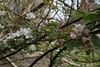 jdy101XX20170411a2230Bias0 stops.jpg (rachelgreenbelt) Tags: orderrosales malus subfamilyamygdaloideae england colorpinkandwhite hampshire overton rosids familyrosaceae prunusall prunusormalus europe uk eudicots greatbritain magnoliophyta rosaceae rosaceaefamily unitedkingdom apple floweringplants mixedcolors multiplecolors oneplant singleplantportrait spermatophytes