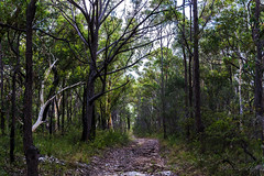 Australian bush (Theresa Hall (teniche)) Tags: 2018 australia australianbush canberra janineregan nsw teniche theresahall wyeenewsouthwales bush bushland bushwalk nativeplants natives summer tree trees