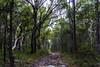 Australian bush (Theresa Hall (teniche)) Tags: 2018 australia australianbush canberra janineregan nsw teniche theresahall wyeenewsouthwales bush bushland bushwalk nativeplants natives summer tree trees