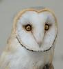 Tokyo Owl (Stuck in Customs) Tags: tokyo japan treyratcliff stuckincustoms stuckincustomscom owl portrait bird eyes feathers