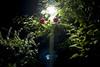 L1019029c (haru__q) Tags: leica m8 leicam8 minolta rokkor red flower 赤い花