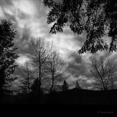 February's Morning Sky (Joan Gray) Tags: blackandwhite bnw bw trees sky clouds morningwalk morningsky oregon pacificnorthwest