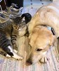 Thunder buddy! (Olsen9310) Tags: wrigley dogs cat tanner