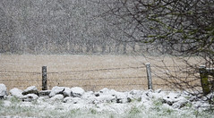 It's a grey fence day! (Elisafox22) Tags: elisafox22 sony rx10iii lifeisarainbow grey fencedfriday hff fencefriday fence fenceposts field stubble snowing barbedwire snow texture textured colourful outdoors winter rocks wall tree branches view scotland aberdeenshire elisaliddell©2018 trolled