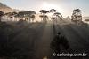 rio do rastro-14 (CARLOS_HP) Tags: amanhecer arvore estrada serradoriodorastro alvorada araucarias blumas bomjardimdaserra contraluz neblina nuvens santacatarina silhueta solnascendo