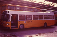 NORTHERN 4602 VPT602R IS SEEN AT SUNDERLAND DEPOT ON 22 OCTOBER 1983 (47413PART2) Tags: vpt602r northern bus leylandnational