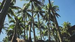 Island Cove Cavite Mermaid Go Kart Fishing Village (9 of 66) (Rodel Flordeliz) Tags: islandcove islandcovecavitecavite gocarting imuscavite smmoa islancove gilbertremulla mermaid belikeamermaid gokart horsebakcriding python snake amenities rooms spa fishingvillage