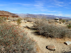 P1270553 (Dr. Fieldgood) Tags: anza borrego california camping amber larry amy desert