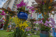 So orchid (Rakuli) Tags: ifttt 500px orchid tet lunar new year saigon ho chi minh city flowers orchids vietnam festival