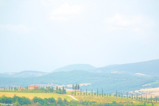 Tuscany mountains & cypress trees.  🌳🌾🌳