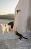 Astypalea, Greece (RomanK.) Tags: greece greek astypalea ellada ellas hellas chora cat