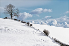 Diagonal (Antony Ward) Tags: breathtakinglandscapes snow winter snowscenes yorkshire white bluesky clouds