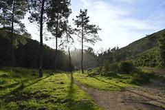 "Ray (""S.L"") Tags: nikon nature landscape ray blue sky green gras tree trees sunset view vista evening meditation harmony art artistic wide"