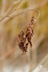 Nature (Eric et Synthia) Tags: photographie photography nature quebec canada d7500 apsc nikon 70300mm forêt forest bois wood flore plantlife flora flou bokeh macro proxi