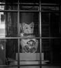 Cat in the window (Bill Morgan) Tags: fujifilm fuji xh1 35f14 mitaka bw jpeg acros