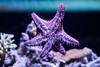 Monterey Bay Aquarium (joshbousel) Tags: animal aquarium ca california fish monterey montereybayaquarium northamerica places starfish travel unitedstates unitedstatesofamerica usa