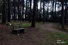Galicia - senda de illa da toxa (Ismael Owen Sullivan) Tags: senda camino galicia nature nikon naturaleza natural bosque d5300 forest fotografia foto green gallego garden grove illa da toxa isla de la toja