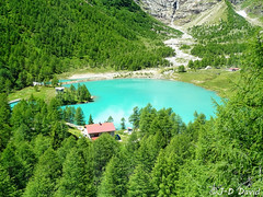 Lac Palü - Alp Grüm 2 (jean-daniel david) Tags: montagne lac forêt sapin glacier alpes suisse grisons torrent turquoise bleu vert paysage nature