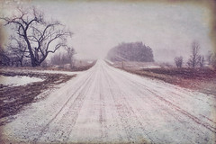 Falling Snow and a Country Road (Dave Linscheid) Tags: winter snow cold rural country tree agriculture texture textured watonwancounty mn minnesota usa topaztextureeffects weather snowing