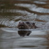 Stephen Hembery's Willow Hide (1 of 2) (Robin M Morrison) Tags: stephen hembury wildlife somrset somerset willow hide