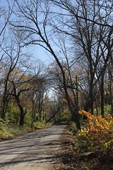 Rural Road (jHc__johart) Tags: foliage leaf leaves fallcolor kansas