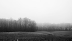 A foggy afternoon in late January. (andreasheinrich) Tags: landscape fields forest path fog winter january blackandwhite blackandwhitephotos misty cold germany badenwürttemberg neckarsulm dahenfeld deutschland landschaft felder wald weg nebel januar schwarzweis neblig kalt nikond7000