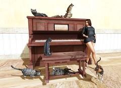 Crazy cat lady (Spankymypony) Tags: photo picture portrait piano cats cute room bench books woman secondlife flickr black orange white yellow brown wood catwa bento maitreya kitja pets animals