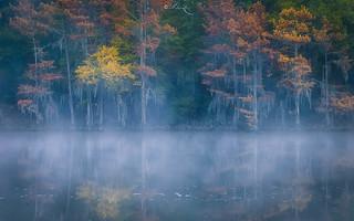 A Perfect Morning at Caddo Lake