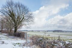IMG_6752 (mollyblobs) Tags: cambridgeshire castor location unitedkingdom arable snow
