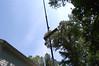 DSC_2297 (markpeterson1) Tags: jdtreepros redoak treeremoval