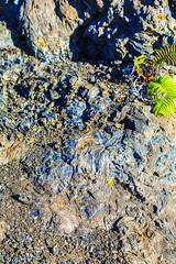 Iridescent Basalt (wyojones) Tags: hawaii hawaiivolcanoesnationalpark maunaulu spatter spatterrampart basalt pahoehoe iridescent difraction volcanicglass colors wyojones np