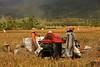 IMG_0453 (Kalina1966) Tags: bali island indonesia people rice field
