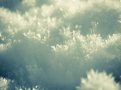 C0000009. (haijee13) Tags: trees tree arbres top treetop snow cîme cîmes arbre randonnée rando neige fonte hautesavoie haute savoie la clusaz confins lac france french alpes alps