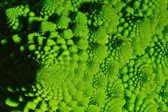 Eat Your Broccoli..... (kanaristm) Tags: broccoli romanesco d850 nikon focusshift focusstacking focus shift stacking macro green kanaris kanarist kanaristm tkanaris tmkanaris copyright2018tmkanaris copyright2018kanaristm tmk brassicaoleracea romanesquecauliflower cauliflower romanesque