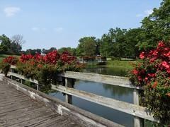 Wheaton, IL, Cantigny Golf Course, Bridges with Flower Boxes (Mary Warren 9.9+ Million Views) Tags: wheatonil cantignygolfcourse nature flora plants trees green leaves foliage bridge wood water flowerboxes blooms blossoms flowers begonias coleus reflection