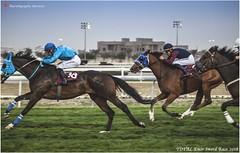 IMG_7147 copy (Services 33159455) Tags: qatar doha horse racing qrec emir horseracing raytohgraphy