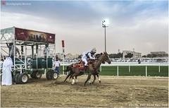 DSC03024 copy (Services 33159455) Tags: qatar doha horse racing qrec emir horseracing raytohgraphy