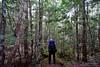 20180228-08-Ironic cliche Instagram type shot (Roger T Wong) Tags: 2018 australia cradlemountainlakestclairnationalpark lakestclair np nationalpark rogertwong sel2470z sony2470 sonya7ii sonyalpha7ii sonyfe2470mmf4zaosscarlzeissvariotessart sonyilce7m2 tasmania bushwalk forest hike moss outdoors tramp trek walk