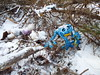 Stuffed Pet Sematary (EX22218 - ON/OFF) Tags: frog blue teddybear letsguide