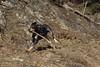 Nasco (bulbocode909) Tags: chiens animaux nature montagnes bâtons rochers troncs