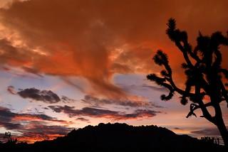 Sunset Mojave Desert 5411 C