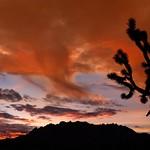 Sunset Mojave Desert 5411 C thumbnail